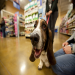 PetSmart Charities Spay/Neuter Grant Program Saves Lives of Nation's Most At-Risk Pets